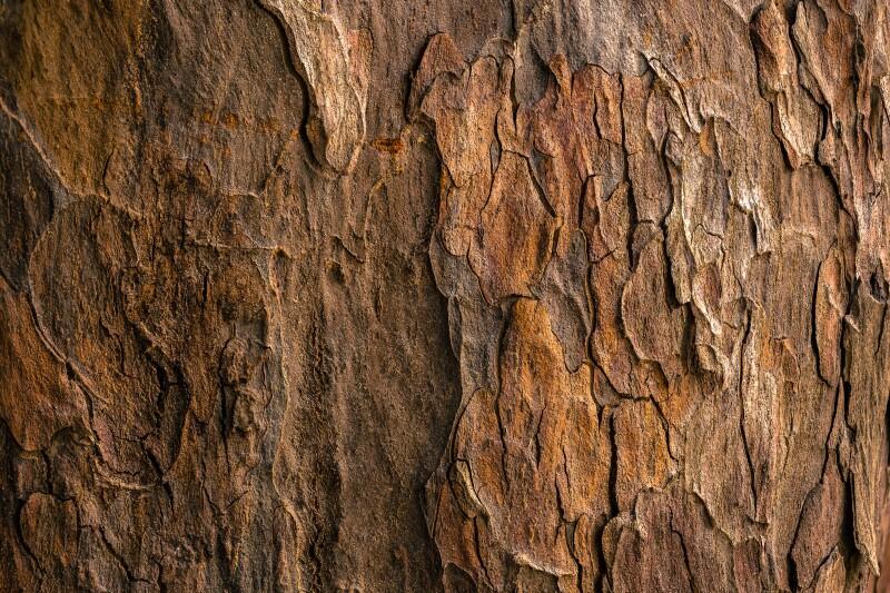 madera arbol